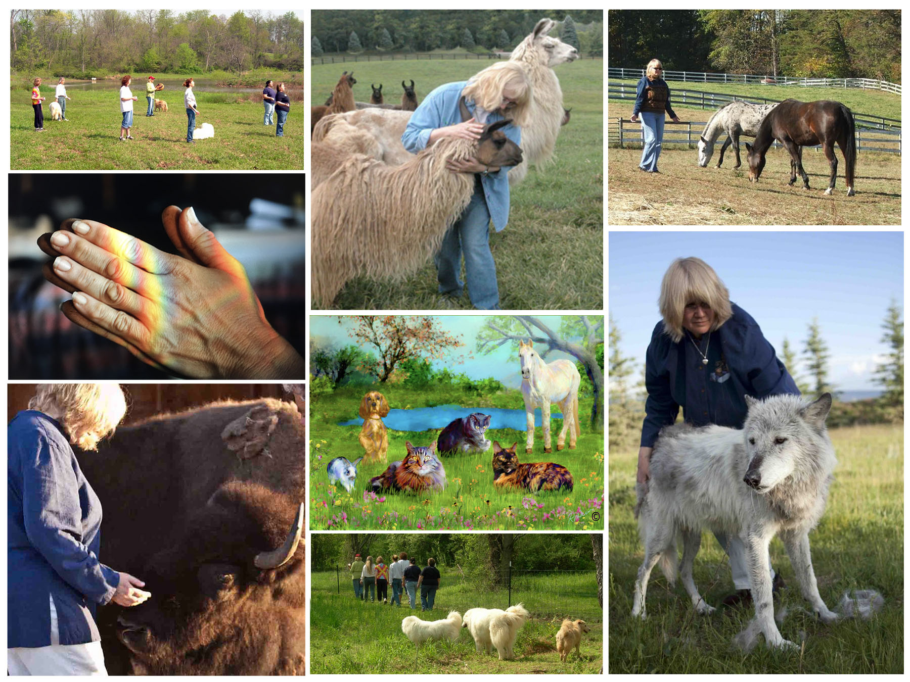 animal paradise communication healing
