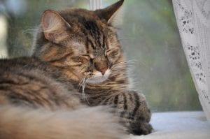animal-meditation