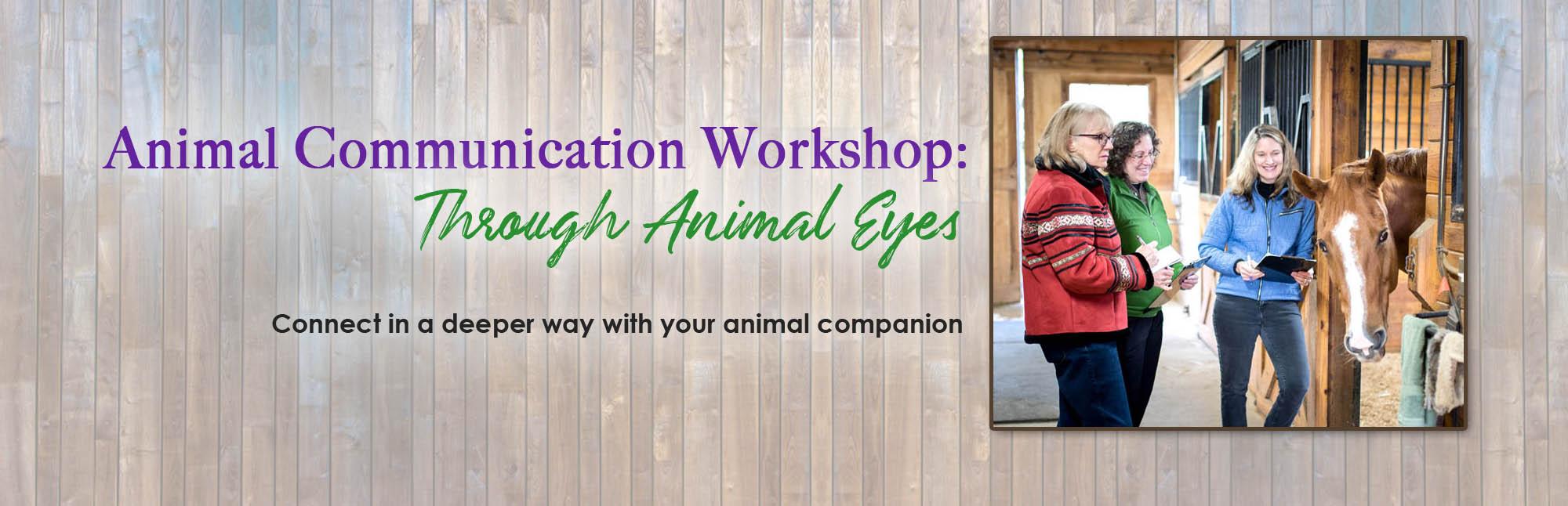 animal-communication-workshop-janet-dobbs