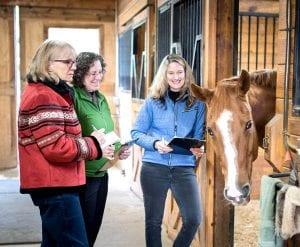 janet-dobbs-animal-communication-horse-session