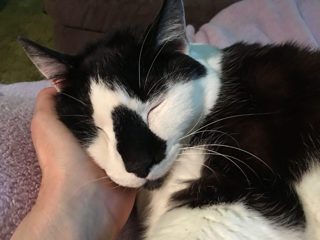 cat-meditation