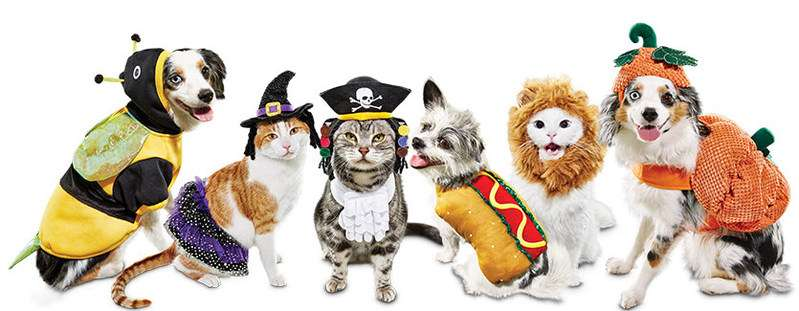 animals-in-costumes