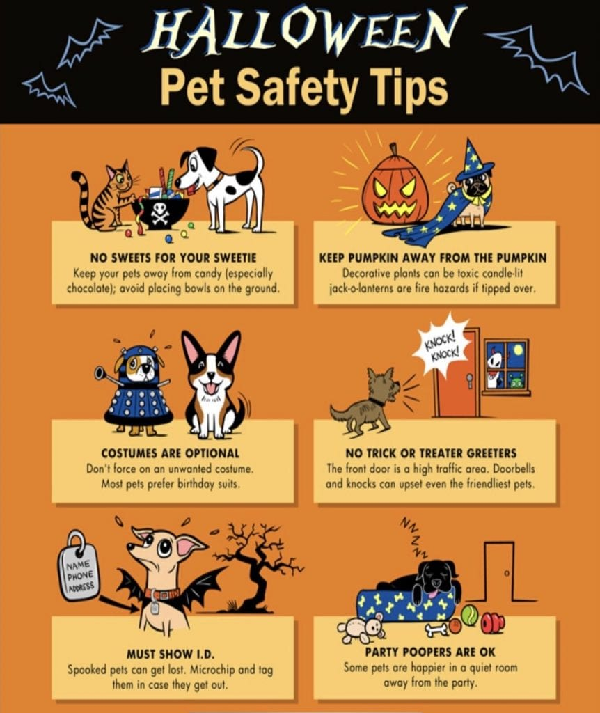animal-safety-halloween-tips