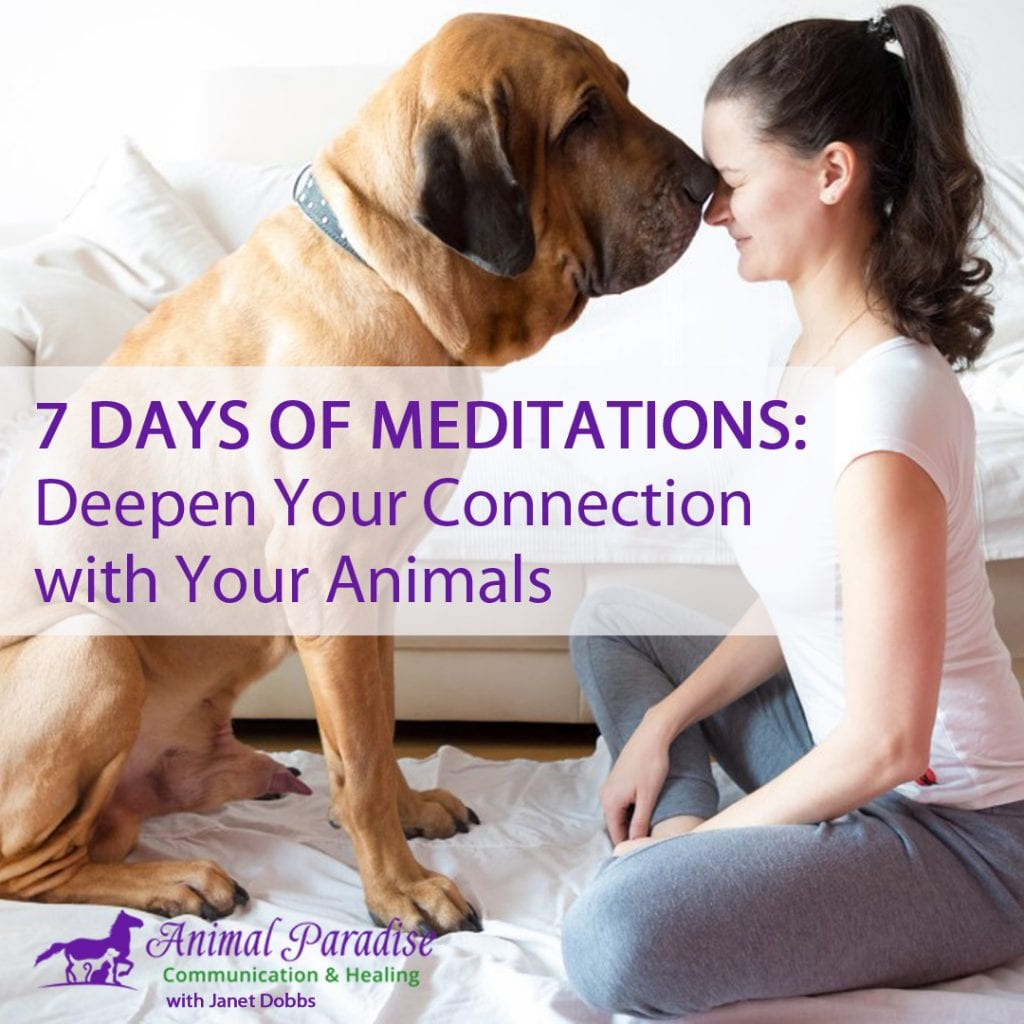 7-days-meditation-with-your-animals