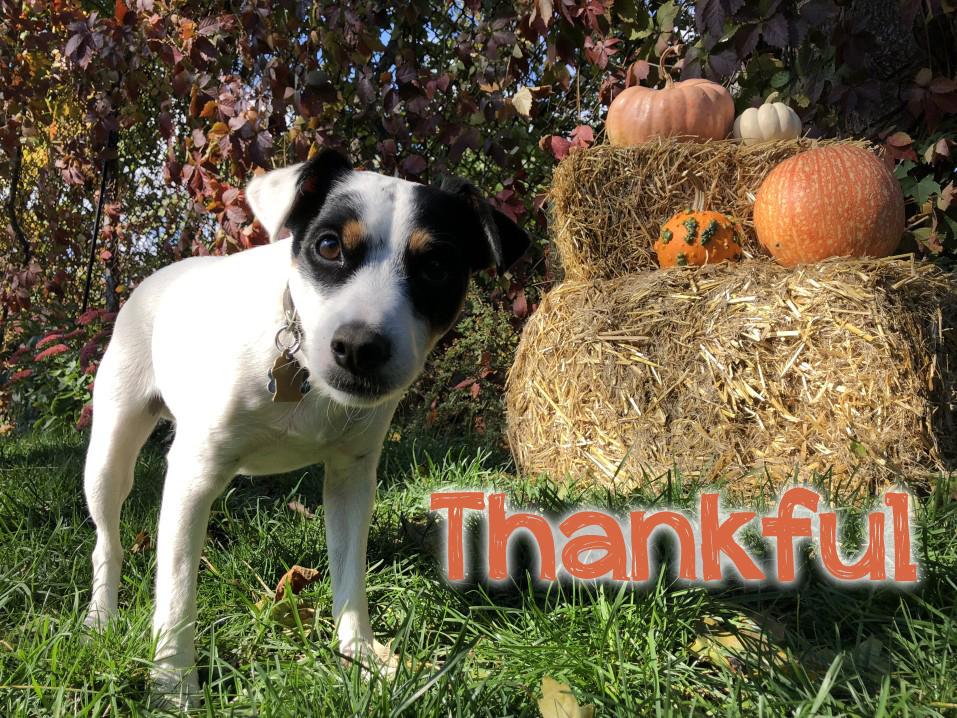 thankful-for-animals