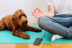 meditate-with-dogs