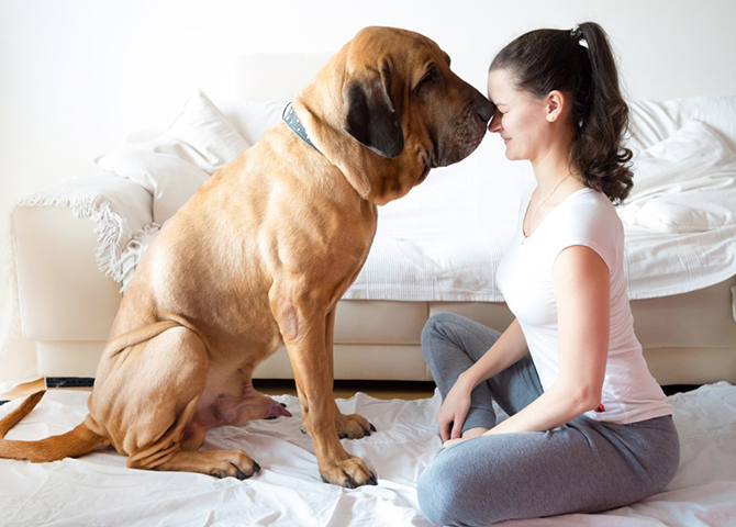 7-day-guided-meditations-with-your-animals