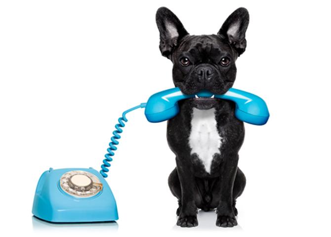 animal-communication-the-basics-1