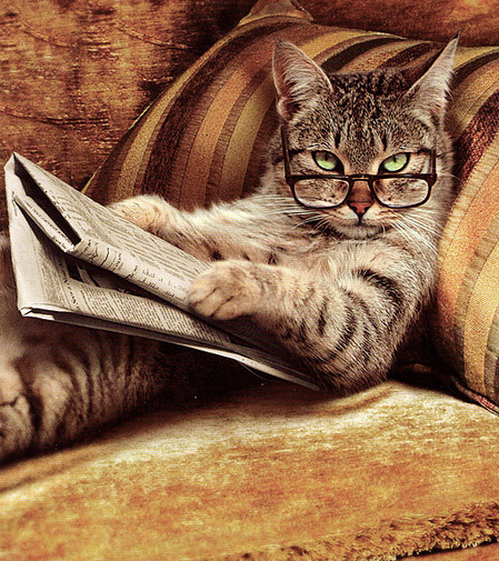 cat-reading-glasses