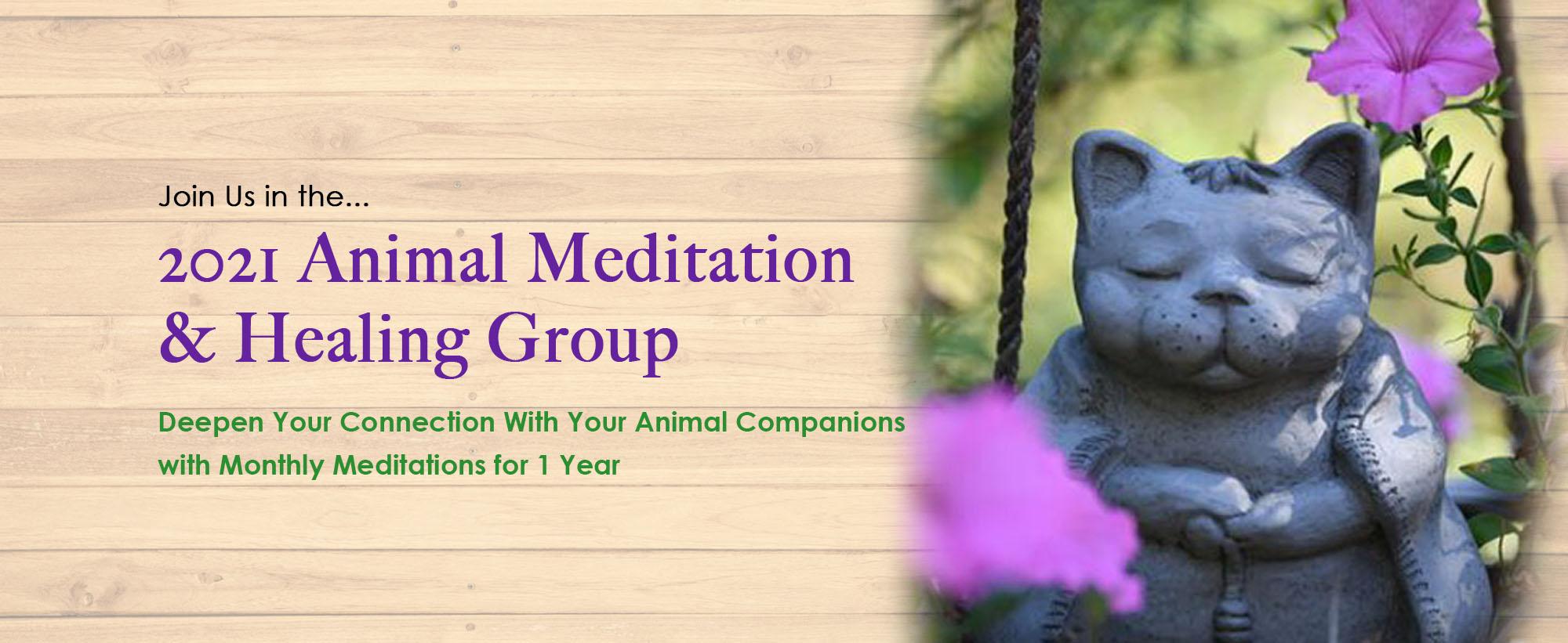 animal-meditation-healing