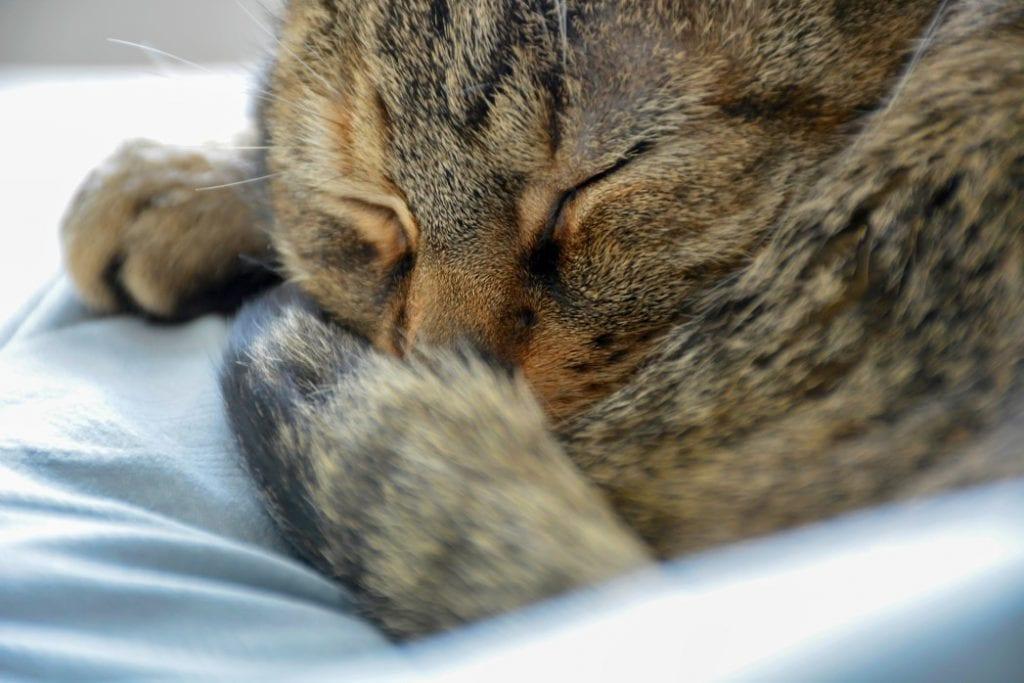 relaxing-sleeping-cat