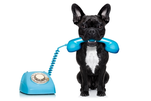 dog-and-phone-animal-communication-workshop